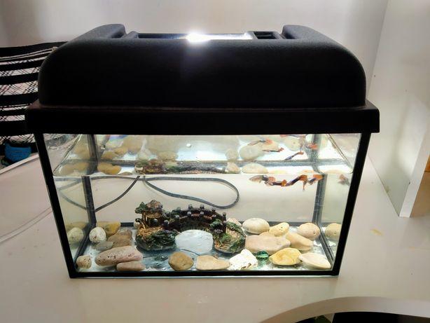 Продам аквариум вместе с рыбками,почти новый в отличном состоянии