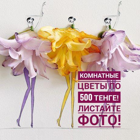 Комнатные цветы!!!