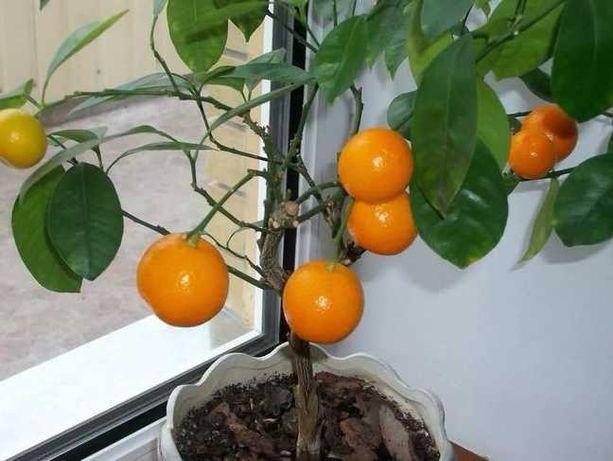 мини-деревья Экодар комплект для выращивания