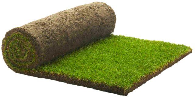 Rulouri de gazon natural, gazon rulou -Ferma productie Mures
