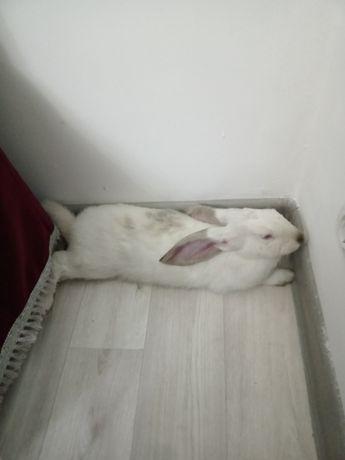 Продам кролика домашний