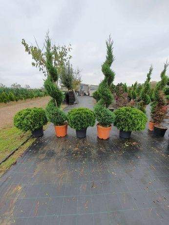 Plante decorative de ce mai bună calitate
