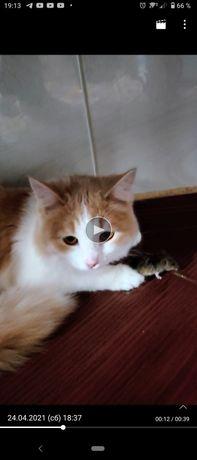 Пропала молодая кошка,  за вознаграждение.