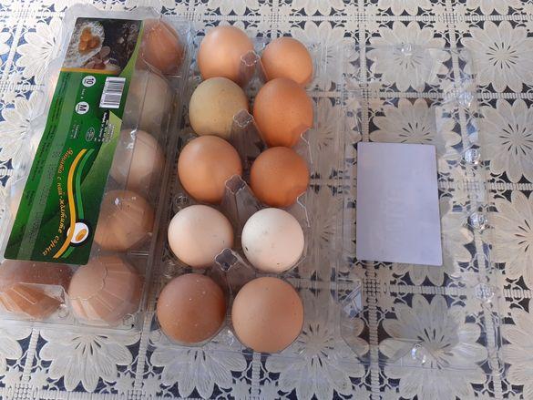 Продавам пресни яйца от щастливи кокошки