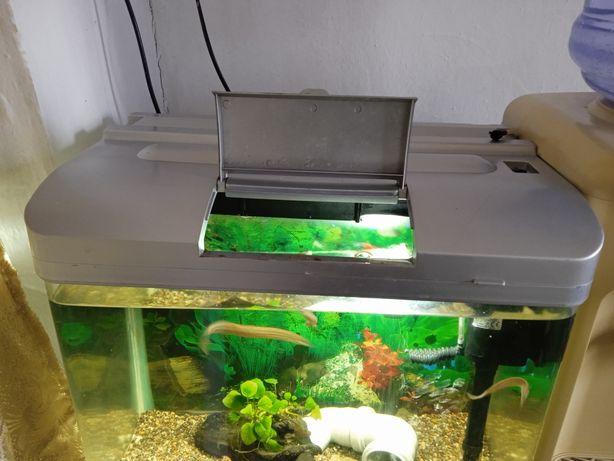Аквариум с рыбами продам дёшево.