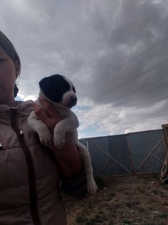 Отдам щенка в добрые руки