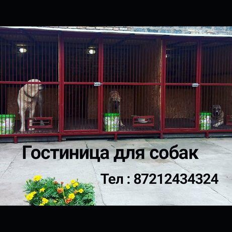 Гостиница, передержка для ВЗРОСЛЫХ собак., 3.000 тн в сутки
