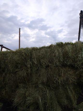 Луговое, зелёное сено.