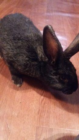 Продам кролов 6 месяцев