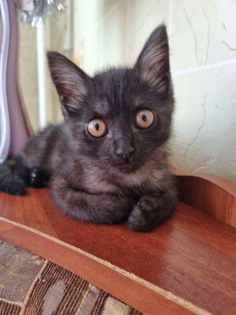 Отдам кошку с новым лотком, миской, игрушками, лежанкой