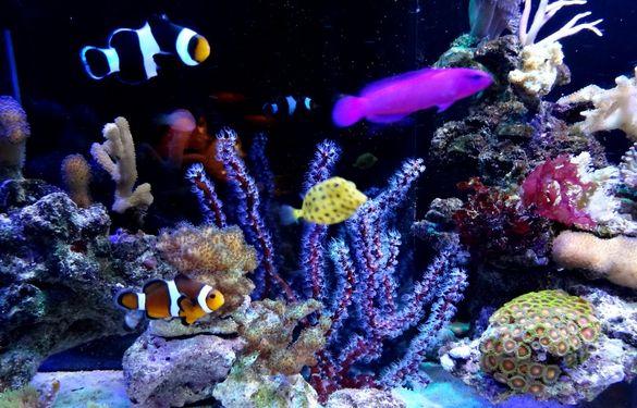LED Cree Epistar цветни 1-100W,380-780nm изработка осветлениe аквариум