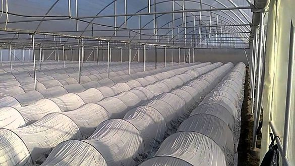 Найлон за лехи ролка 2м./ 250 м. Натурален за тунели за разсад