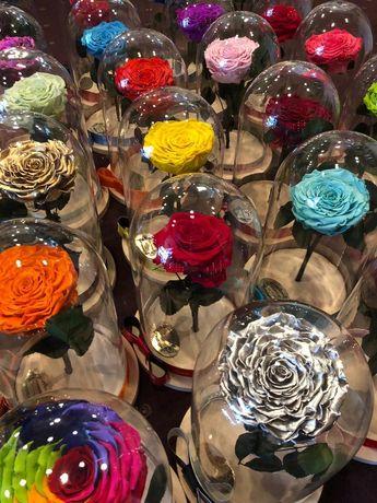 Trandafiri criogenati in cupola de sticla