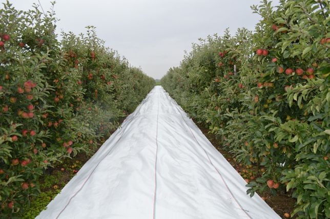 Agrotextil Antiburuieni, Aditivat UV= ALB: 4.15x100ml=1230lei,100gr/mp