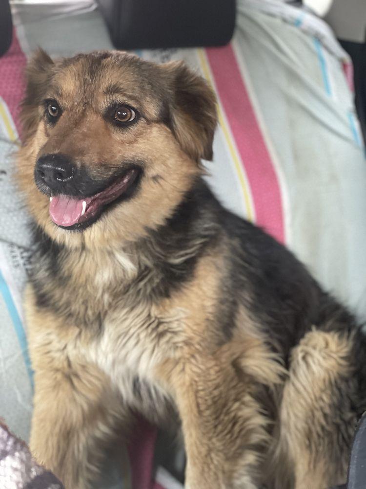 Собака 2 года стерилизованная