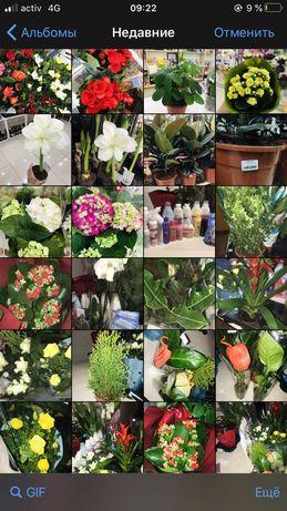 Комнатные цветы по низкой цене