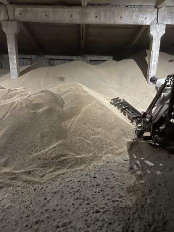 Кормовая пшеница