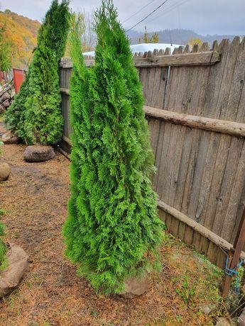 Plante decorative pentru o gradina de vis