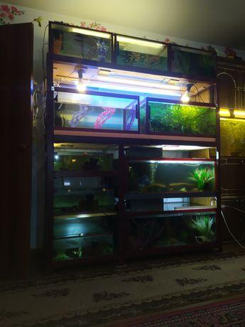 Продается стеллаж с аквариумами