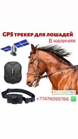 Спутниковый GPS для лошадей/ малга арналган трекер/ ошейник