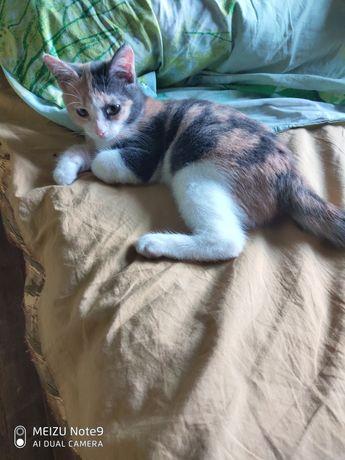 Отдам котенка девочка 2 месяца,от паразитов обработана,игривая ,