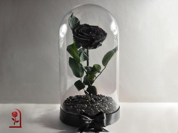 Естествена Вечна ЧЕРНА роза в ГОЛЯМА стъкленица / Подарък за Жена