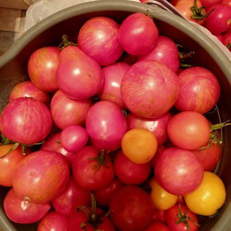Продам дачные помидорки для засолки
