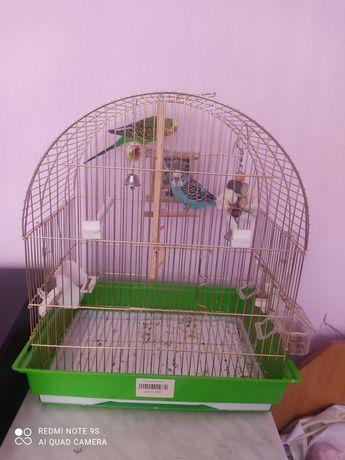 Продам попугаев 5 месяцев