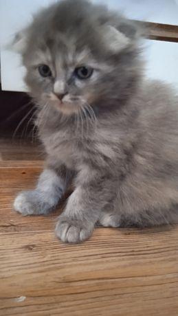 Котёнок- девочка