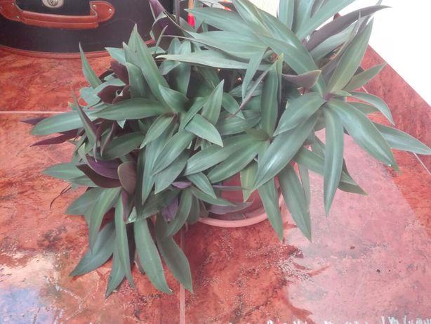 Planta de apartament