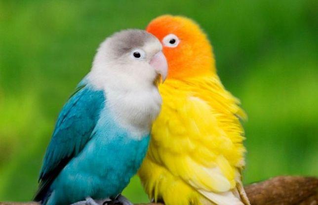 Papagali și Hamsteri.