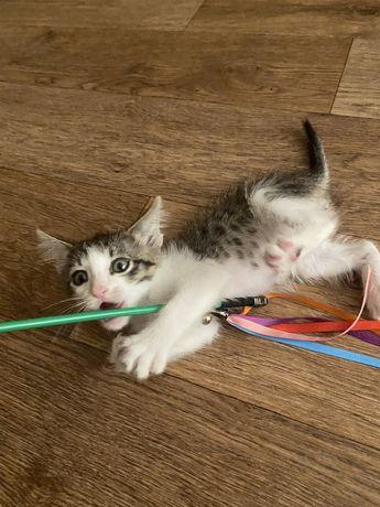 Кот мальчик - 1 месяц ищет дом!