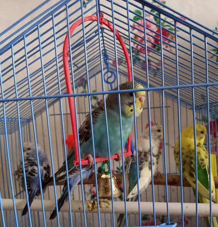 Продам попугаев.
