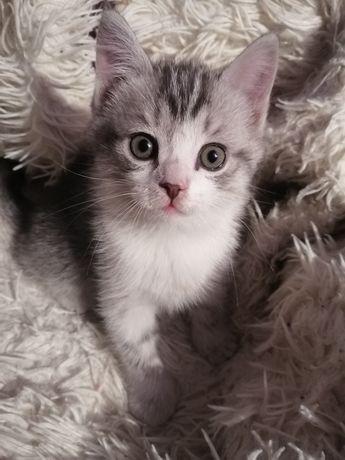 Мальчик котенок!
