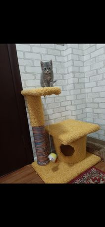 Домик для кошки.