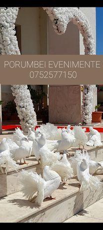 Porumbei ornament pentru nunti