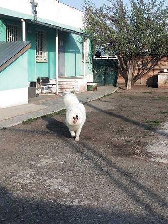 гостиница для собак и кошек Pet House - услуги по передержке