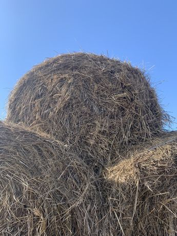 Продам сено в рулонах (тюках) 6000 тенге