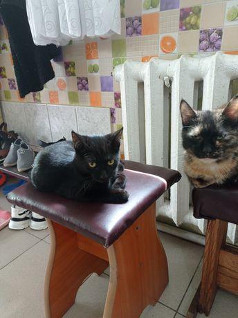 Отдам молодых кошек .