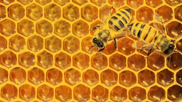 Пчелен мед на едро