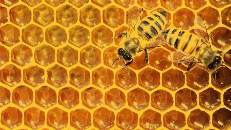 Пчелен мед на едро гр. Чирпан - image 1