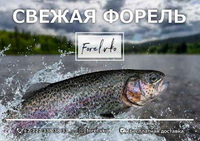 Рыба Форель свежая и готовая продукция