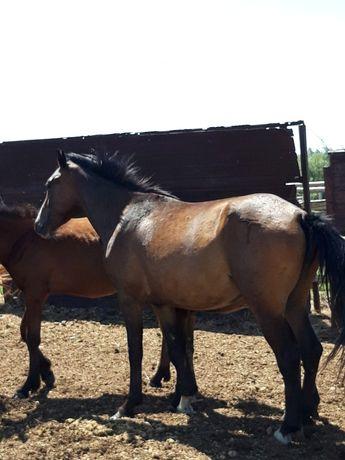 Лошадь/ Жылқы/Байтал
