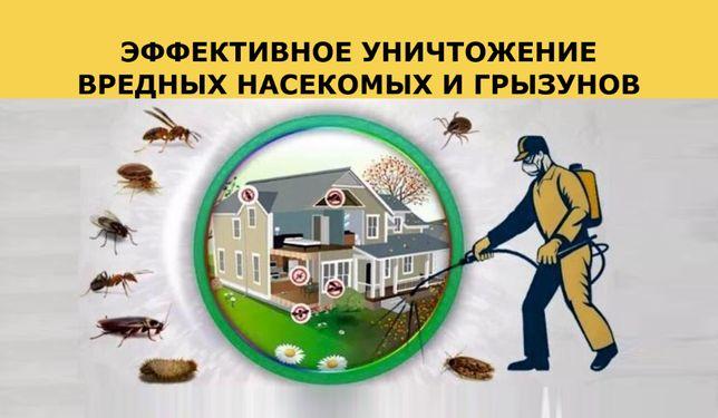 дезинфекция дезинсекция дератизация уничтожение блох, клопов ,таракано