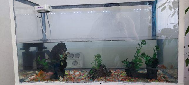 Рыба с аквариумом 4 рыба