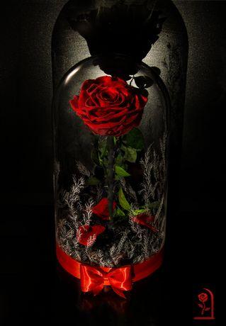 Вечна ЕСТЕСТВЕНА роза в ГОЛЯМА стъкленица