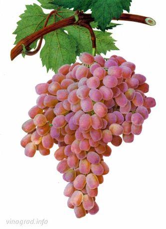 """Продам виноград """"Розовый Тайфи"""""""