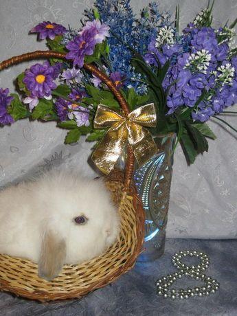 Карликовые декоративные крольчата