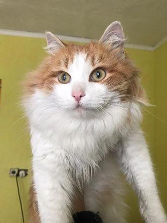 Кот в хорошие руки