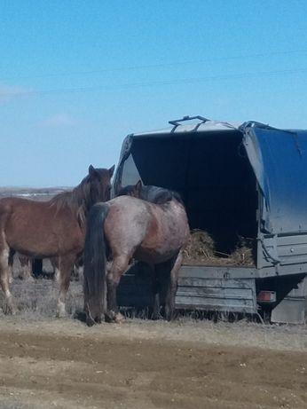 Перевозка сельхоз животные